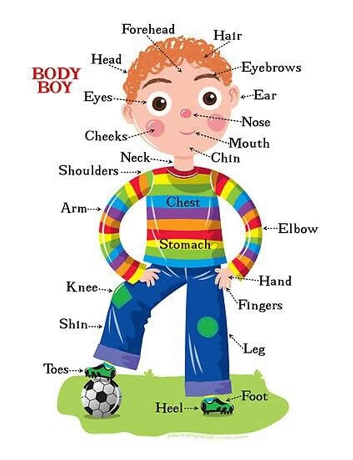 The Human Body Vocabulary: Let's Explore the Human Body!